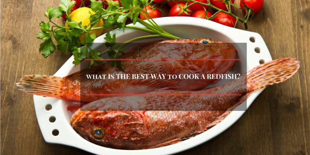 what-is-redfish