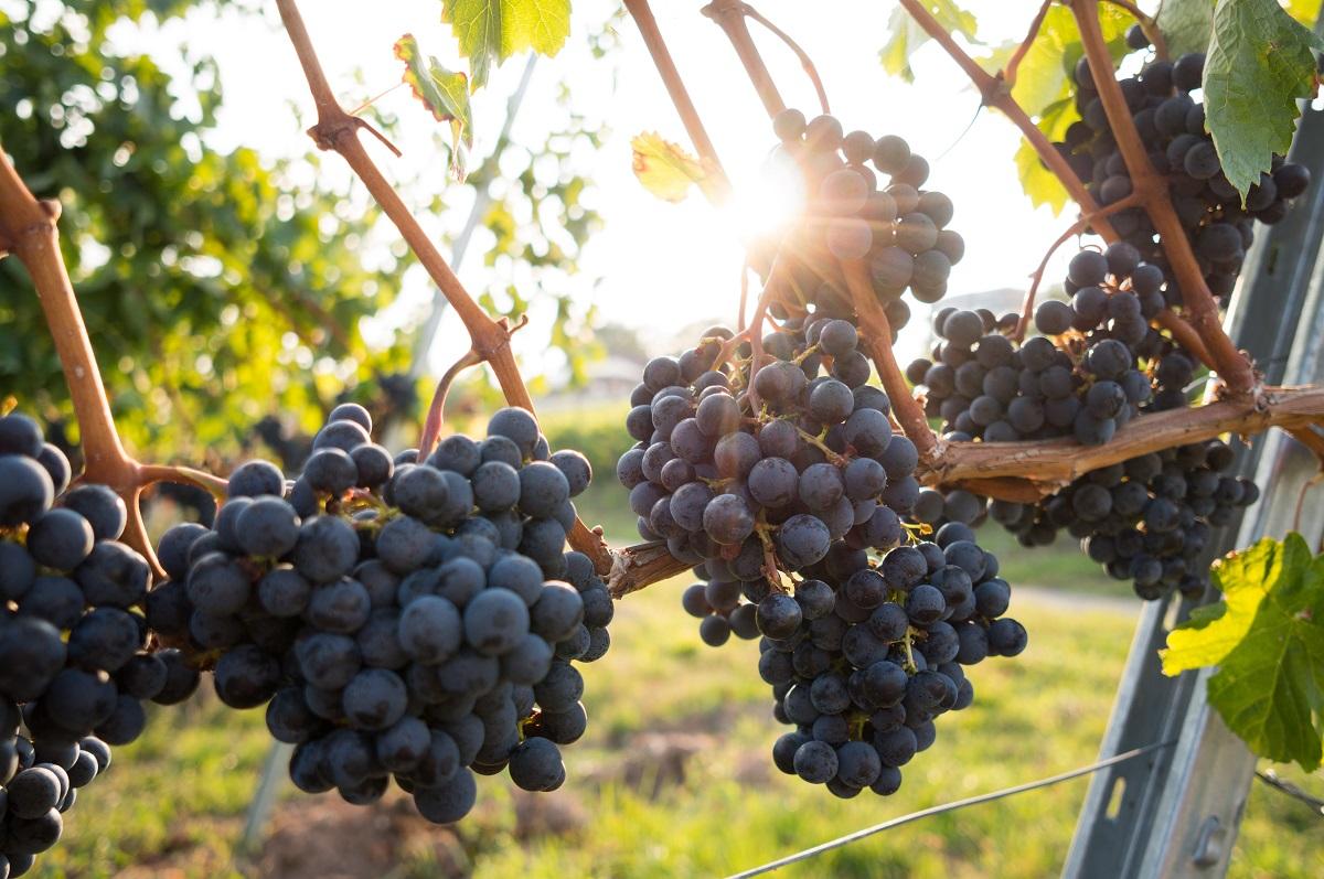 marsala wine substitute