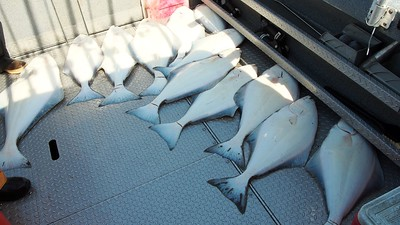fishing halibut